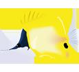 Yellow Longnose Butterflyfish ##STADE## - look 14