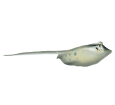Manta ray ##STADE## - look 65
