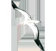 Albatross ##STADE## - look 5