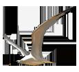 Sandwich Tern ##STADE## - look 16020