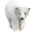 Polar Bear ##STADE## - look 7
