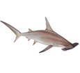 Hammerhead shark ##STADE## - look 1