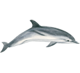 Dolphin Adult - look 1