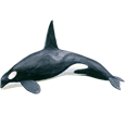 Orca Whale ##STADE## - look 65