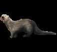 Otter ##STADE## - look 12