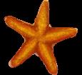 Starfish ##STADE## - look 17