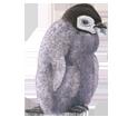 Emperor Penguin ##STADE## - look 59
